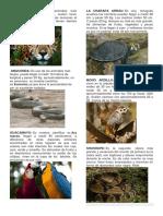 Album Animales de La Selva Resumen