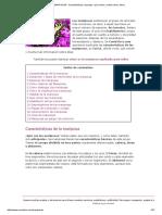 MARIPOSAS - Características, Especies, Qué Comen, Cuánto Viven, Fases
