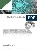 Fractales en La Biología