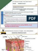 Tejidos Blandos, Huesos , Musculos PDF