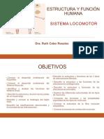 7a Sesión Estructura y Función Sistema Locomotor