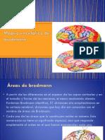 Mapeo Encefálico de Brodmann (1)