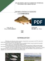 (Prezentare) - Conservarea Fondului Genetic La Cyprinidae