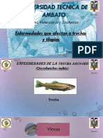 enfermedadesentruchasytilapias-140112153510-phpapp01.pptx