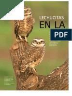Lechucitas Parque Sarmiento