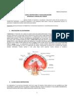27-Anatomia II-24.02.2016-Meccanica Respiratoria e Vascolarizzazione Arteriosa e Venosa Del Torace