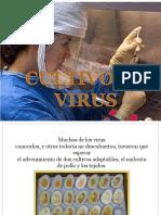 Cultivo de Virus