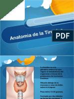 Anatomia y Fisiologia Tiroides