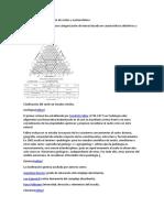 Categoría de La Clasificación de Suelos y Nomenclatura