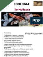 4t.-mollusca-2014