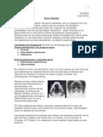 6senomaxilar.doc