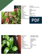 235 Fichas de Plantas Acuáticas