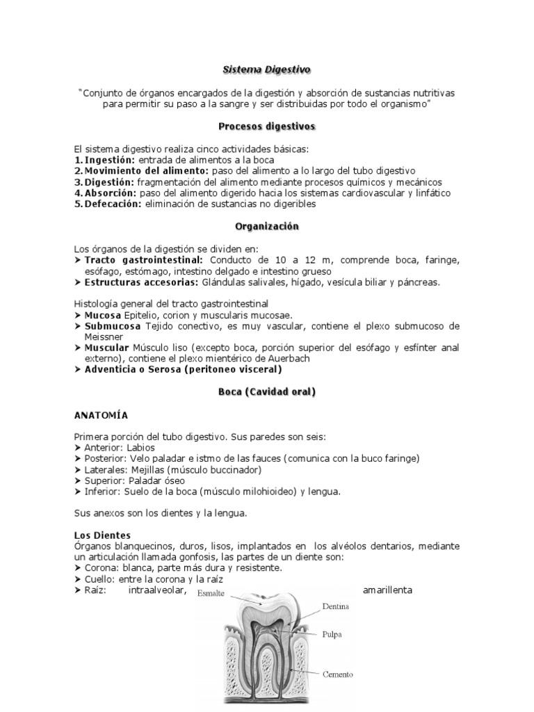 Moderno La Anatomía Del Tracto Gastrointestinal Superior Foto ...