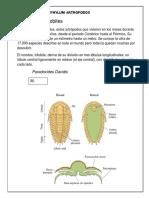 Phylum Artropodos
