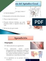 Anatomía Del Apéndice Cecal
