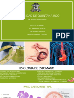 Fisiología Estomago