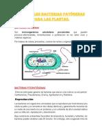 MICROBIOLOGIA corregido