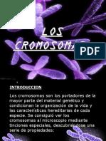 Cromosomas en Humanos y Sus Alteraciones