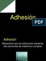 Adhesión.pdf