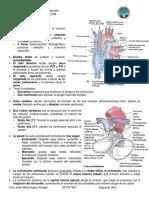 16. Corazón, Cavidades, Válvulas, Vascularización, Conducción y Vasos