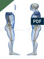 Anatomía Cuerpos