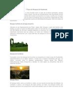7 Tipos de Bosques de Guatemala