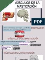 Músculos de La Masticación