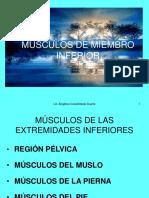 Músculos miembros inferiores pdf