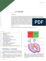 cécité corticale