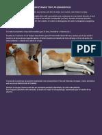 Liposarcoma Costal Sc - Can Santos
