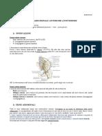 37-AnatomiaII-17.03.2016-Parete Addominale Anteriore e Posteriore
