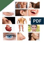 partes del cuerpo imagenes.docx