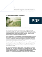 Bosques tropicales 3.docx