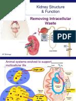 Kidney PPT