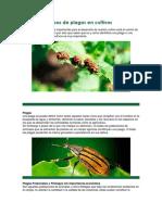 Tipos de Plagas en Cultivos