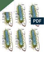 imagen célula procarionte