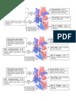 Imágen Automatismo cardíaco
