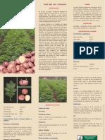 02-PAPA-INIA-303-CANCHAN.pdf