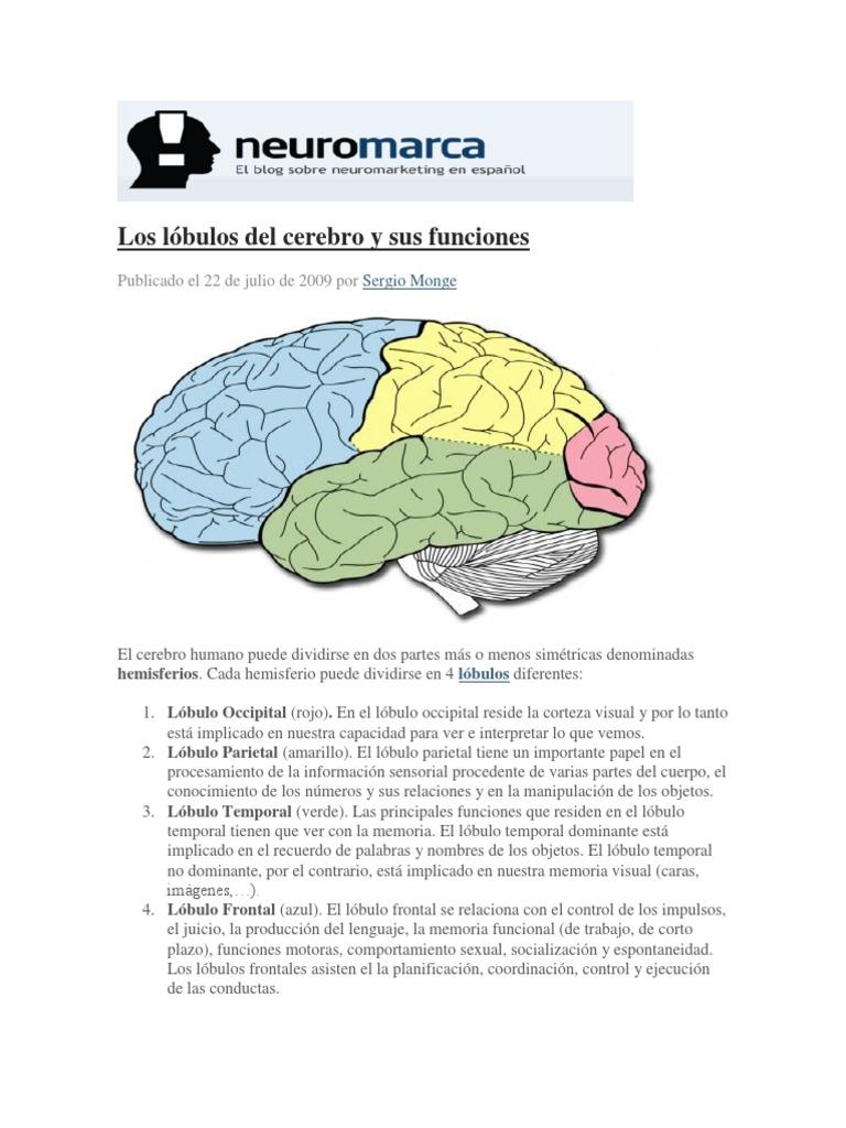 Los Lóbulos Del Cerebro Y Sus Funciones Hemisferio Cerebral Lóbulo Frontal