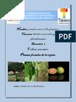 folleto de melendez.docx