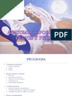 73929652-ANATOMIA-TOPOGRAFICA-DE-LA-PELVIS-parte-1.pdf