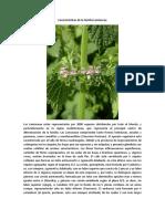 Características de La Familia Lamiaceae