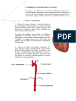 Esquema de Vascularização Do Corpo