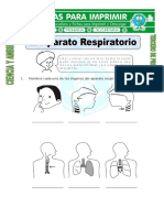 Ficha de El Aparato Respiratorio