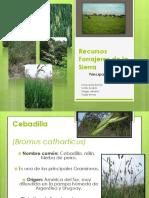 recursosforrajerosdelasierra-110620192135-phpapp02