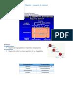 Digestión y Transporte de Proteínas