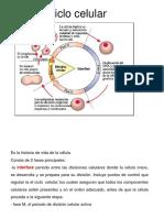 Cromosomas y Mitosis