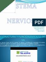 estructurayfuncionamientodelsistemanervioso-121122095802-phpapp02.pptx