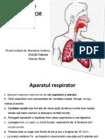 Sistemul Respirator