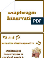 Diaphragm Innervation